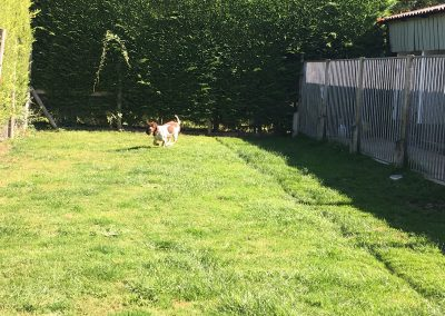 dog-kennels-cattery-west-moors